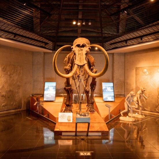 岩宿博物館