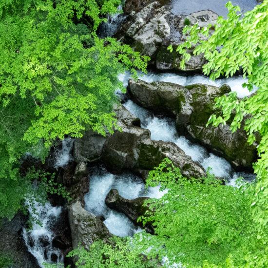 花小橋の魚道