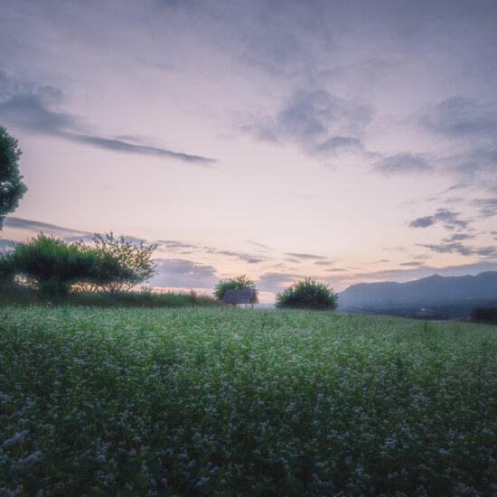 鹿田山 蕎麦の花