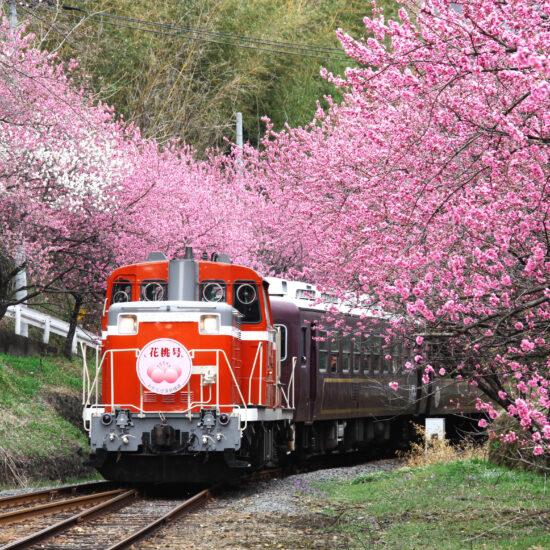わたらせ渓谷鐵道|トロッコ列車