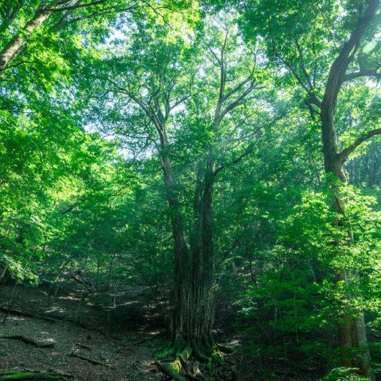 シャロムの樹トレッキングツアー 国民宿舎サンレイク草木